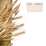 Sheaf of ears of wheat on linen fabric Stock Image
