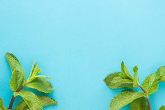 Sheaf of fresh mint leaf on blue background. Top view. Copy space stock image