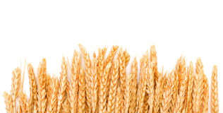Sheaf Golden Wheat Ears Royalty Free Stock Photos
