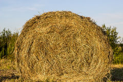 Sheaf of hay Stock Image