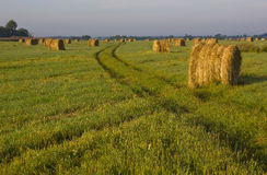 The sheaf of hay at dawn, Novgorod region ,Russia. Dawn in the field, rural landscape, nature Russia, the sunrise in the forest Royalty Free Stock Photos