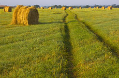 The sheaf of hay at dawn, Novgorod region ,Russia Royalty Free Stock Photography