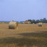 Sheaf of hay on farmland.JH. Sheaf of hay on nrew harvested farmlandJH royalty free stock image