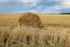 Sheaf of hay on the field. The Hay stack on the field in Siberia Stock Image
