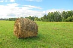 Sheaf of hay Stock Photos