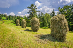 Sheaf of hay hanging to dry on the field Stock Photo