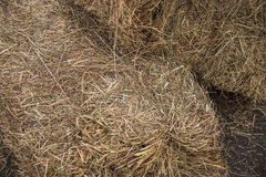 Sheaf of hay. Mown grass dries braces outdoors Stock Images