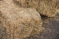 Sheaf of hay. Multiple brackets hay lying on the street Stock Photography
