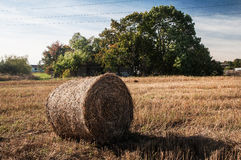 Sheaf of hay Royalty Free Stock Images