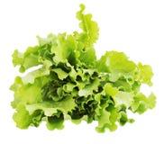 Sheaf of lettuce Stock Image