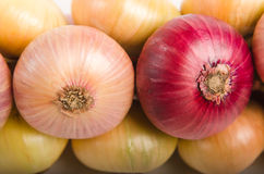 Sheaf of an onions Royalty Free Stock Photos