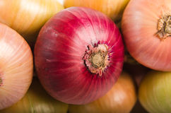 Sheaf of an onions Royalty Free Stock Image