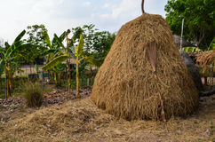 A sheaf of paddy Royalty Free Stock Photography