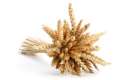 Sheaf of ripe wheat Stock Image