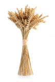 Sheaf of ripe wheat. Isolated on white background Stock Photo