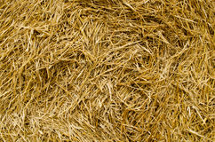 Sheaf of straw close-up. The texture of the pressed straw Stock Photos