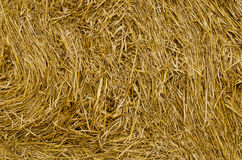 Sheaf of straw close-up. The texture of the pressed straw Stock Photo