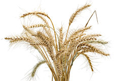 Sheaf of weat Stock Images