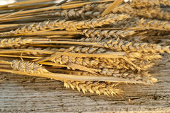 Sheaf of wheat. Winter wheat on the old desk Stock Image