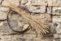 Sheaf of wheat. Winter wheat with stone wall Stock Images