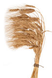 Sheaf of wheat. On white background Stock Images