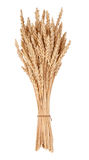 Sheaf of wheat. On white background Stock Photos