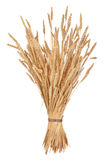 Sheaf of wheat. On white background Royalty Free Stock Images