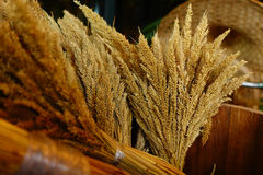 Sheaf of wheat. For background Royalty Free Stock Image