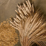 Sheaf of wheat and barley Royalty Free Stock Photography