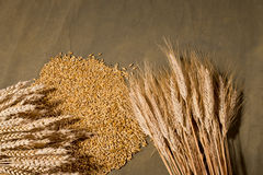 Sheaf of wheat and barley. On the brown desk Stock Photos