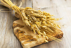 Sheaf with wheat, barley and oat ears Stock Image