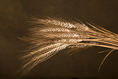 Sheaf Of Wheat. On the dark background Stock Image
