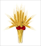 Sheaf of wheat ears with a bow. On a white background Stock Images