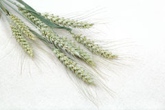 Sheaf of wheat ears on fabric. Sheaf of wheat ears on the background fabric Royalty Free Stock Photo
