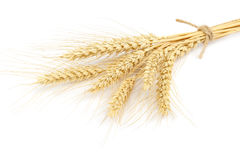 Sheaf of wheat ears on white background. Sheaf of wheat ears isolated on white background Royalty Free Stock Photos