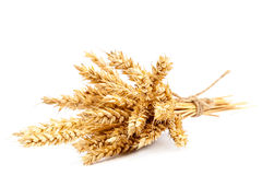 Sheaf of wheat ears on white background. Stock Photos