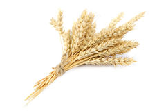 Sheaf of wheat ears on white background. Sheaf of wheat ears isolated on white background Royalty Free Stock Image