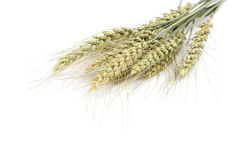 Sheaf of wheat ears on white background. Royalty Free Stock Photos