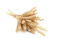 Sheaf of wheat ears on white background. Stock Images