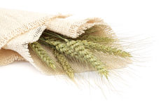 Sheaf of wheat ears on white background. Royalty Free Stock Images