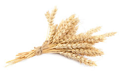 Sheaf of wheat ears on white background. Stock Photo