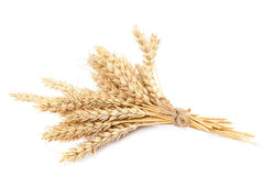 Sheaf of wheat ears on white background. Royalty Free Stock Photography