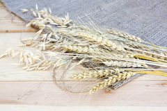 Sheaf of wheat and oat on wooden background Stock Image