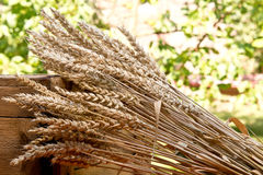 Sheaf of wheat. On the old wooden desk Royalty Free Stock Photo