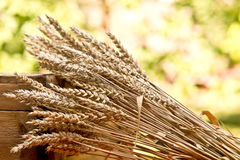 Sheaf of wheat. On the old wooden desk Stock Images