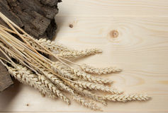 Sheaf of Wheat over Wood Background. Harvest concept. Top view Stock Images
