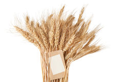 Sheaf of wheat with a price tag on a white Stock Image