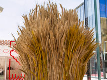 Sheaf of Wheat. Ripe Ears Wheat Set Royalty Free Stock Photo