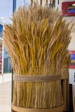 Sheaf of Wheat, Ripe Ears Wheat Set.  Stock Images