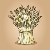 Sheaf of wheat rye sketch doodle. Hand drawn vector image royalty free illustration